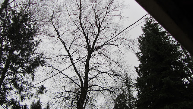overcast sky with leafless tree