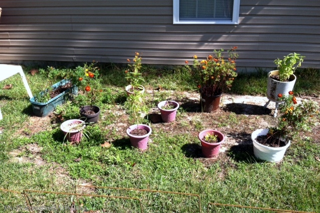 Next generation stay at home mom our first lasagna garden - Lasagna gardening in containers ...