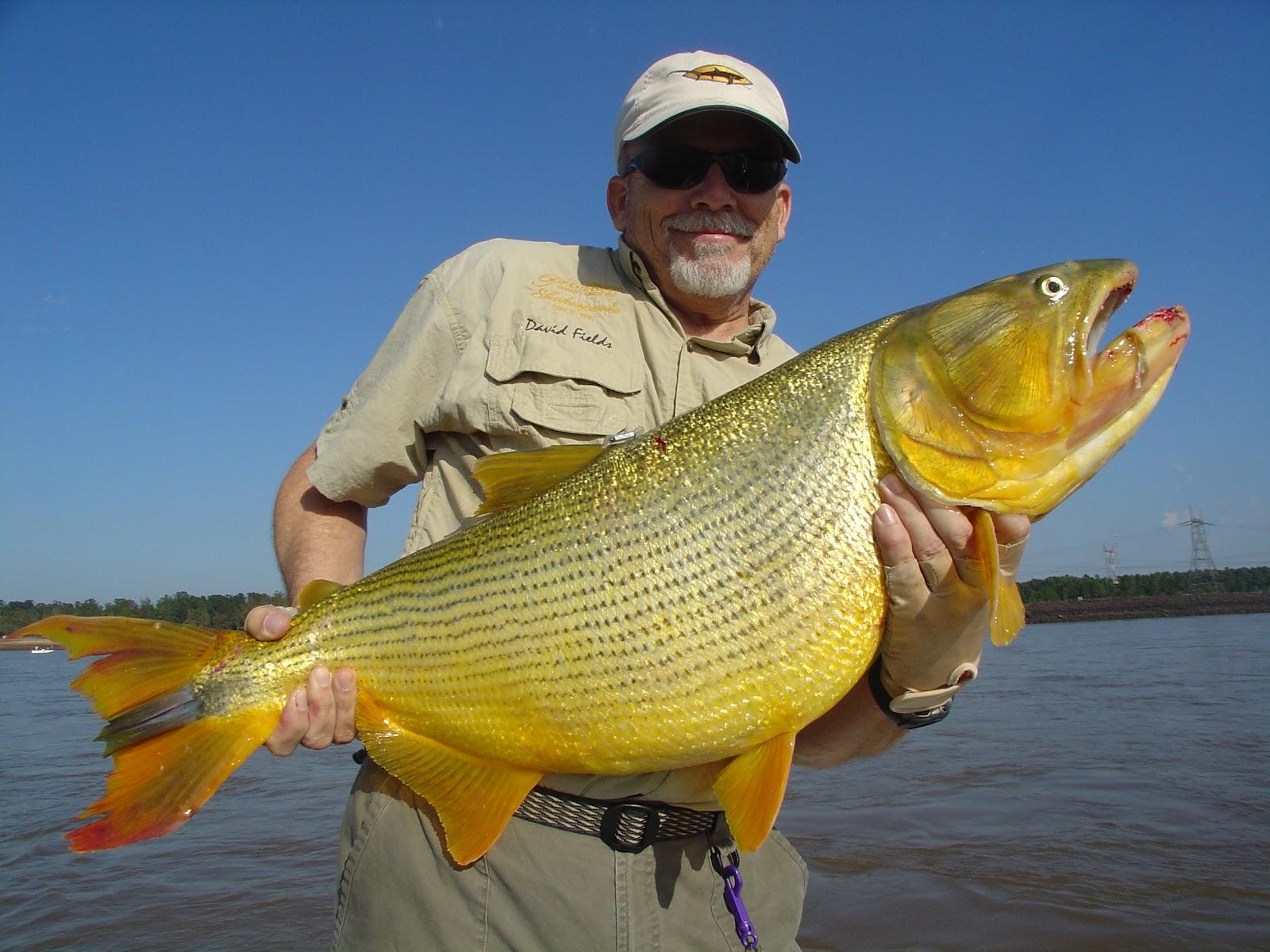 Golden dorado of salto grande uruguay river fishing the for Golden dorado fish
