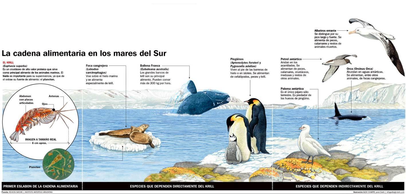 Geograf a argentina mar argentino for Piletas de agua salada en zona sur