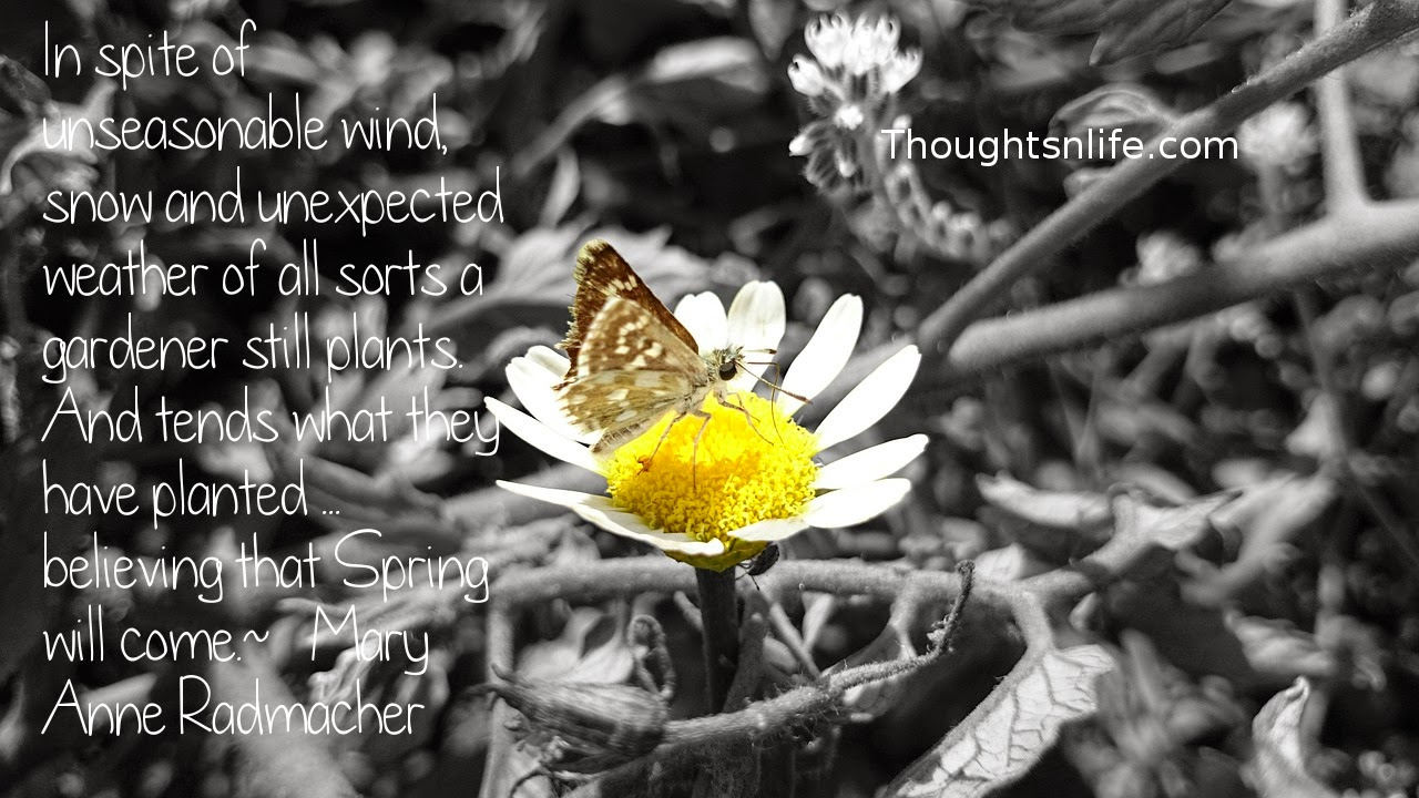 Thoughtsnlife.com: In spite of unseasonable wind, snow and unexpected weather of all sorts – a gardener still plants. And tends what they have planted ... believing that Spring will come.  ~   Mary Anne Radmacher