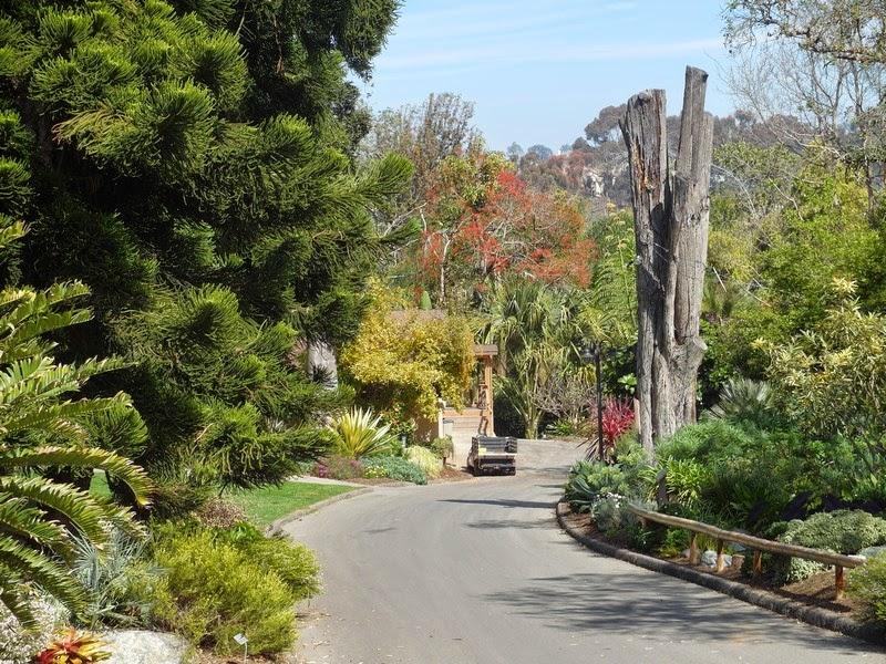 Pampas2palms San Diego Botanic Garden