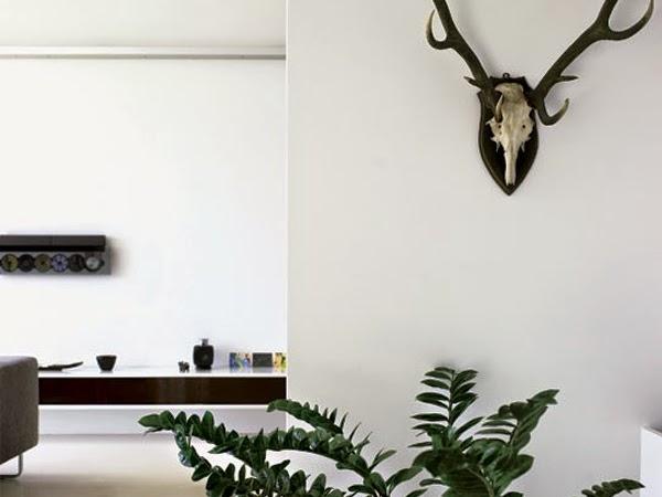 Biała ściana z porożem