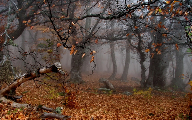 Fog And Rain In Autumn Forest