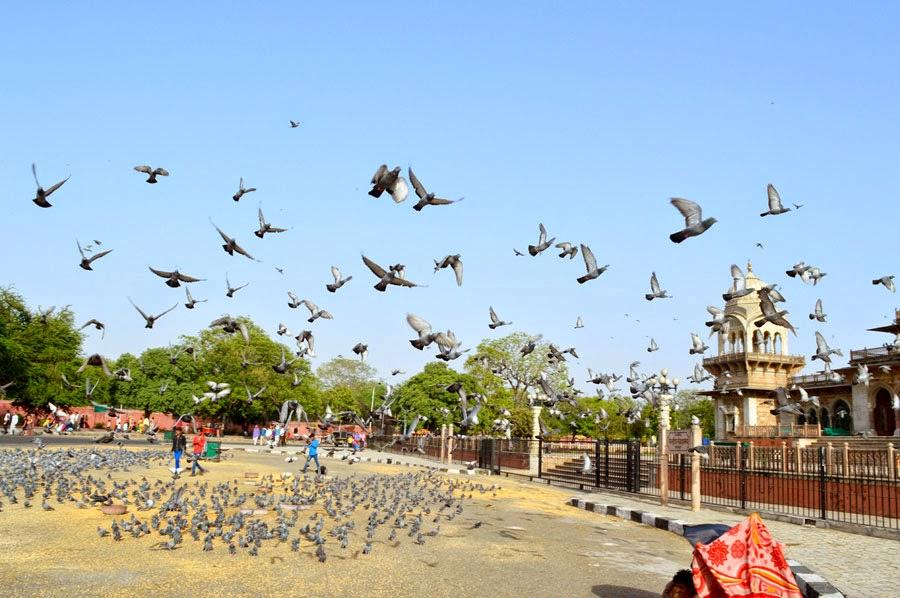 Birds devoured grain and fly