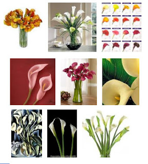 Perfect Calla Lily Flower Gallery