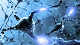 Neurociências e Reabilitação Funcional