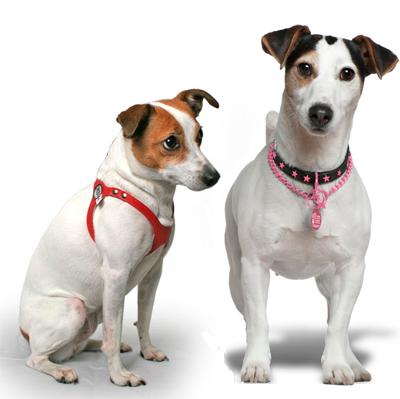 Que es mejor para mi perro el collar o el arnes es x y for Como hacer un collar para perro