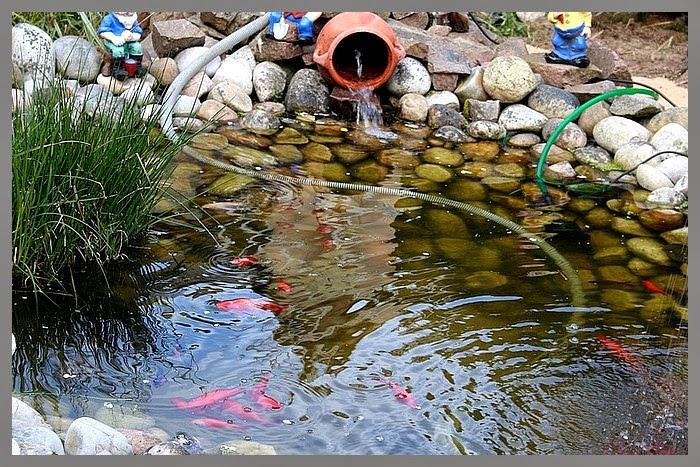 Aux jardins d 39 am lie le bassin aux poissons l 39 endroit for Plante bassin poisson