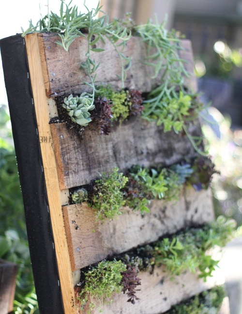 Pallet garden exterior beauty diy ideas pallet for Vertical pallet garden