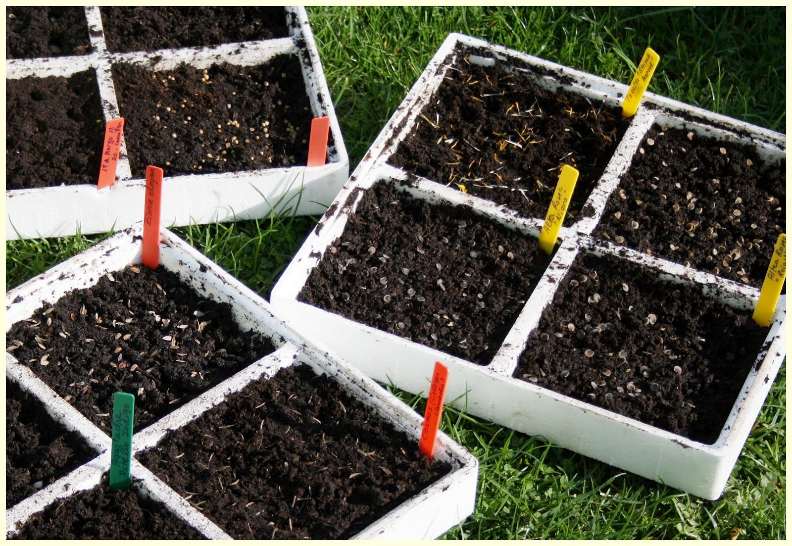 El jard n de margarita semilleros de flores y alguno m s - Tierra para semilleros ...