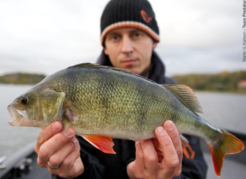 abborfiske i norge