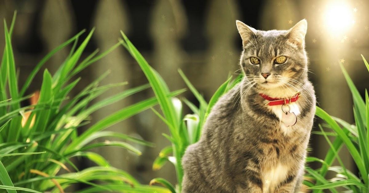 Аниме картинки девушки котики