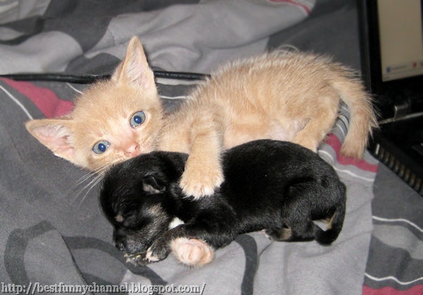 Red kitty and puppy.