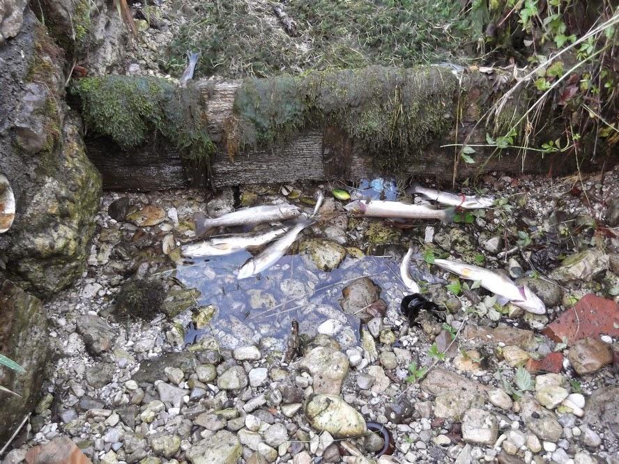 Trasaghis: vandali chiudono la roggia moria di trote ad Alesso