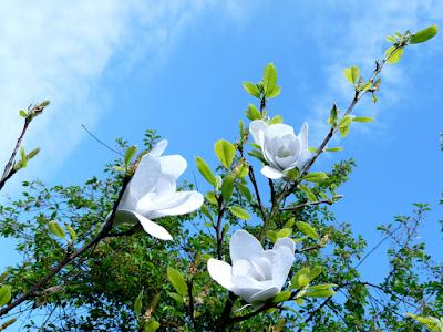 DIY: Szydełkowe magnolie