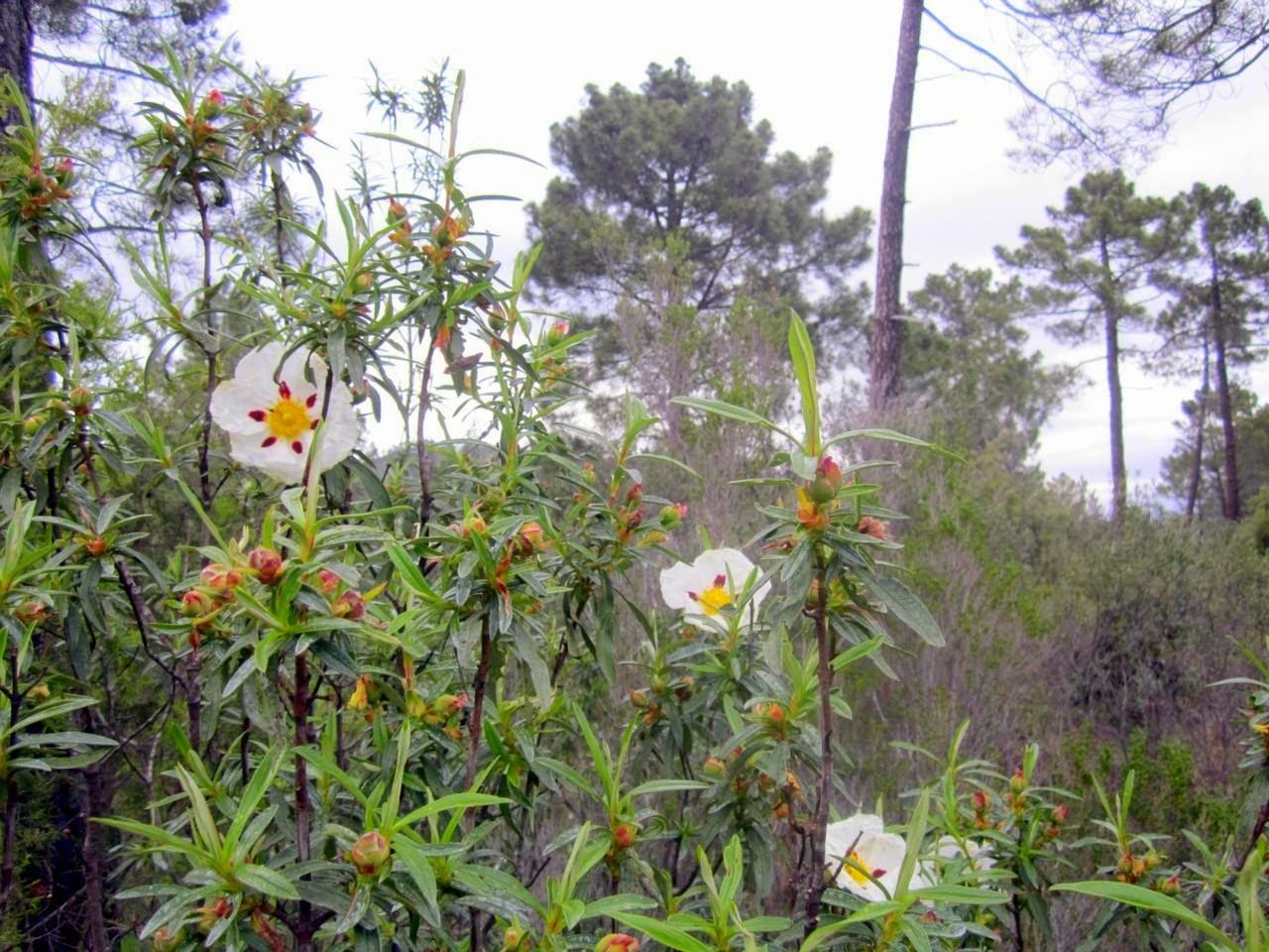 Flores y plantas de nuestros jardines casillas de ranera for Casillas para jardin