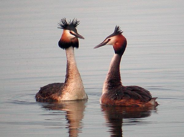 Laghetto di basiglio gli uccelli del laghetto di basiglio for Grosso pesce di lago