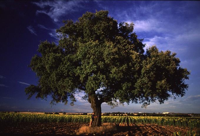 T conmigo el paseo de los rboles for Arbol con raices y frutos