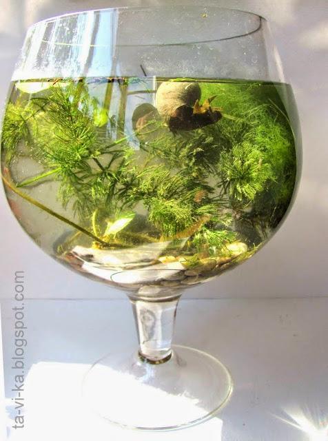 аквариум-пруд