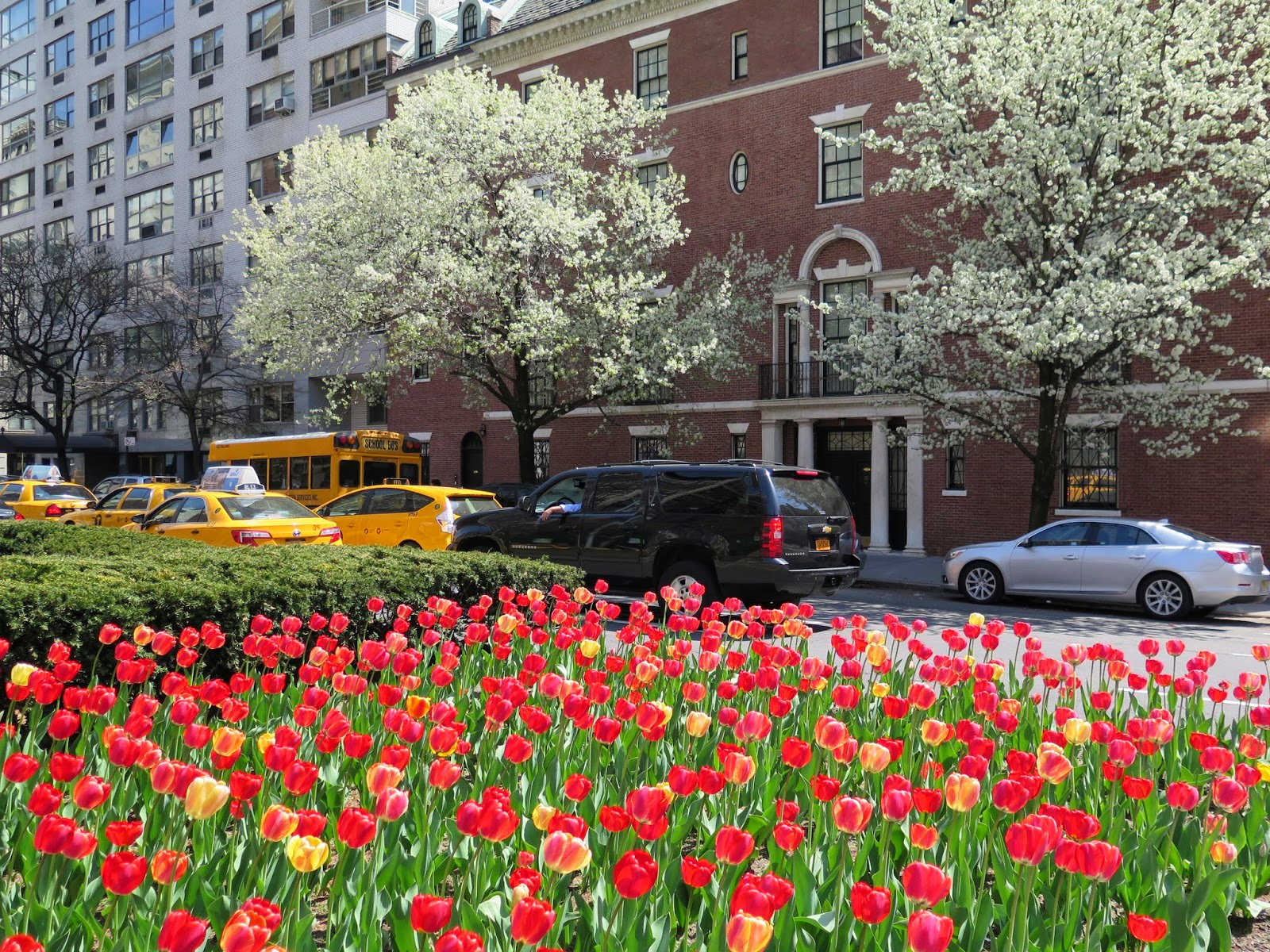 Ciao Domenica: April in New York
