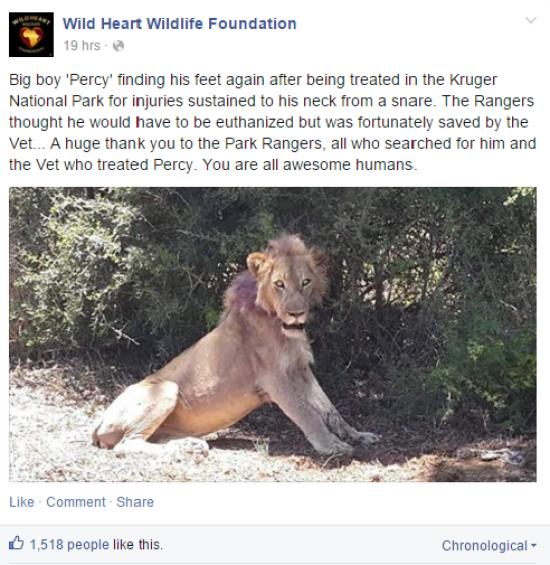 http://www.asalasah.com/2016/01/kasihan-singa-ini-lehernya-terikat.html