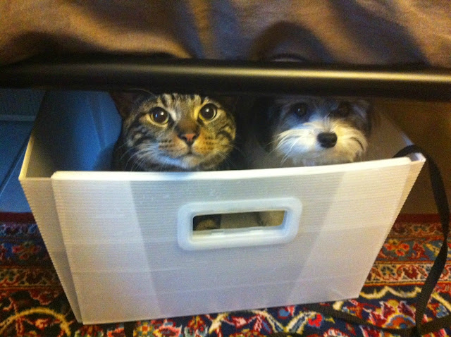 funny animal pictures, cat and dog in box