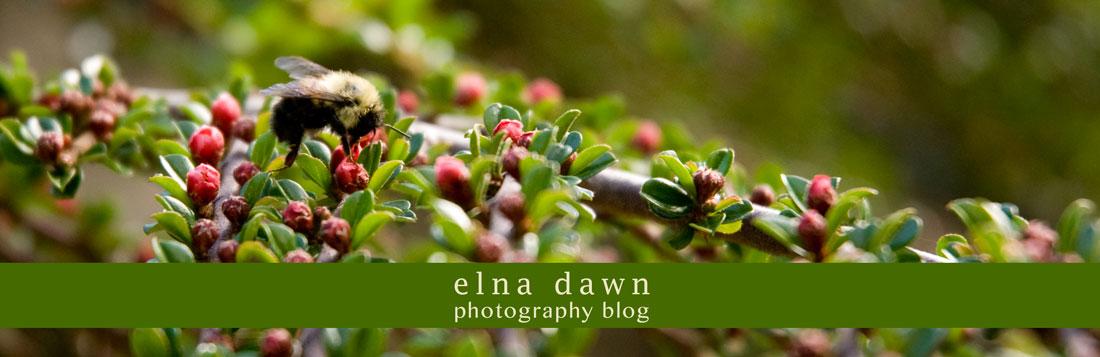 elna dawn