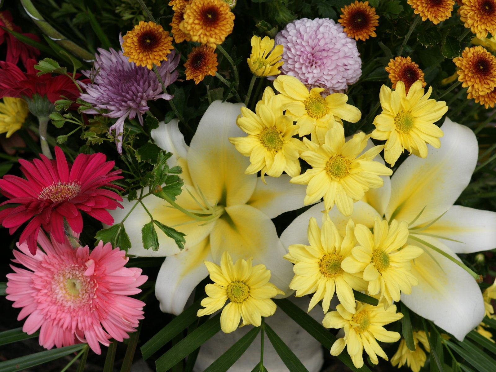 Flowers for flower lovers flowers wallpapers flowers wallpapers izmirmasajfo