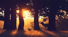 To κρυφό μονοπάτι - Το ξύλινο μονοπάτι