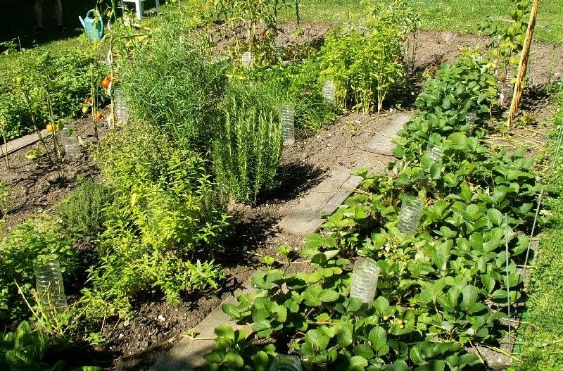 Les jardins familiaux de louveciennes tr s bonne ann e for Jardins de jardiniers