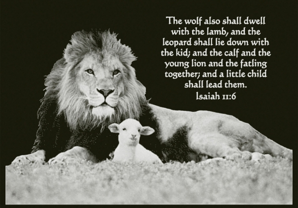 And a little child will lead them quot isaiah 11 1 6