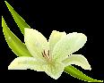 Flores Exóticas e Raras