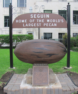 The world's largest, oldest Pecan on display in Seguin, TX
