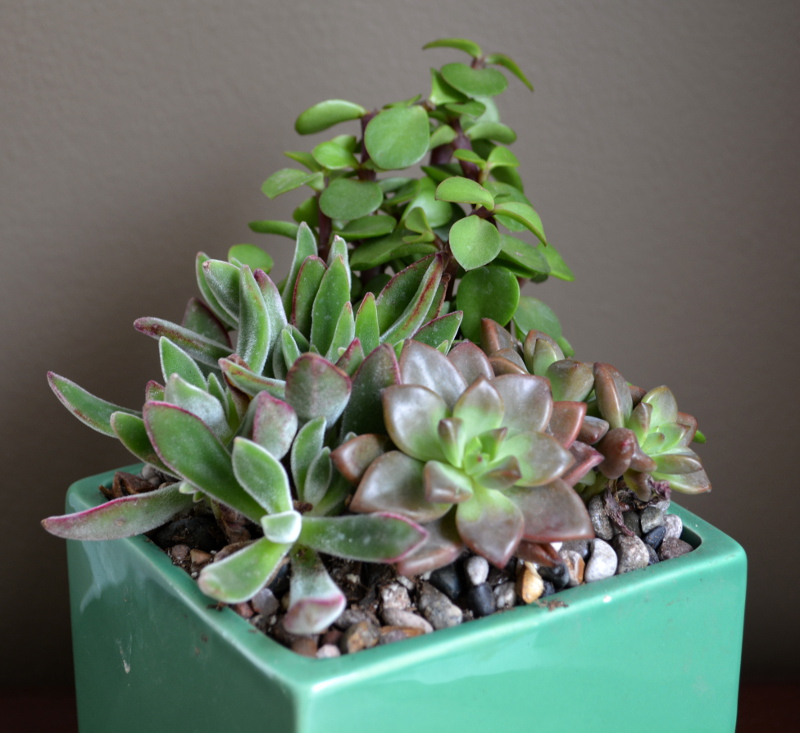 cozy birdhouse | succulent arrangement