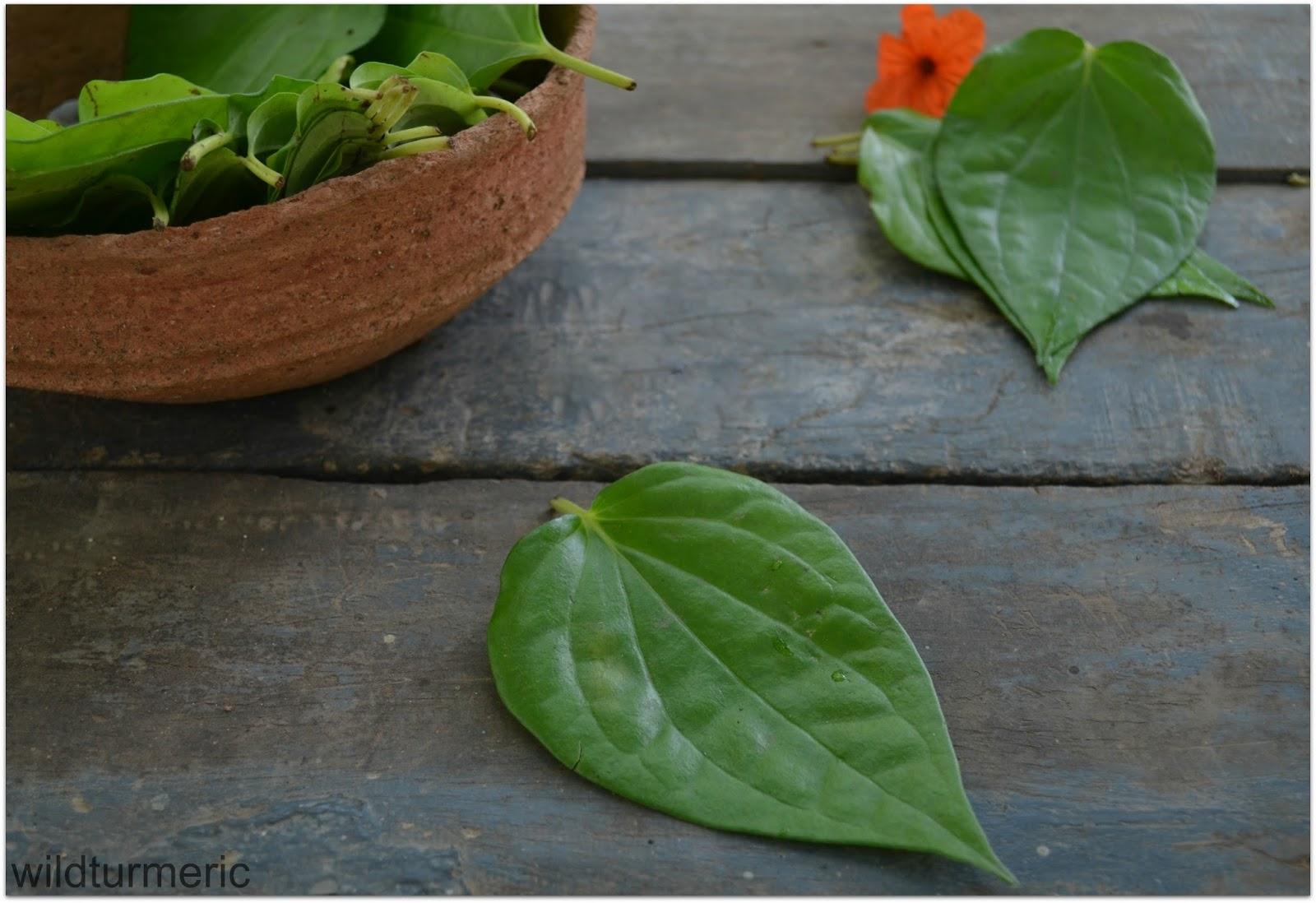 5 Best Health Benefits Amp Uses Of Betel Leaf Paan Leaf Piper Betle Paan Ka Patta Wildturmeric