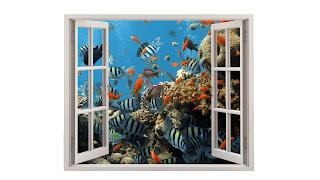 Da minha janela vejo um coral com peixes