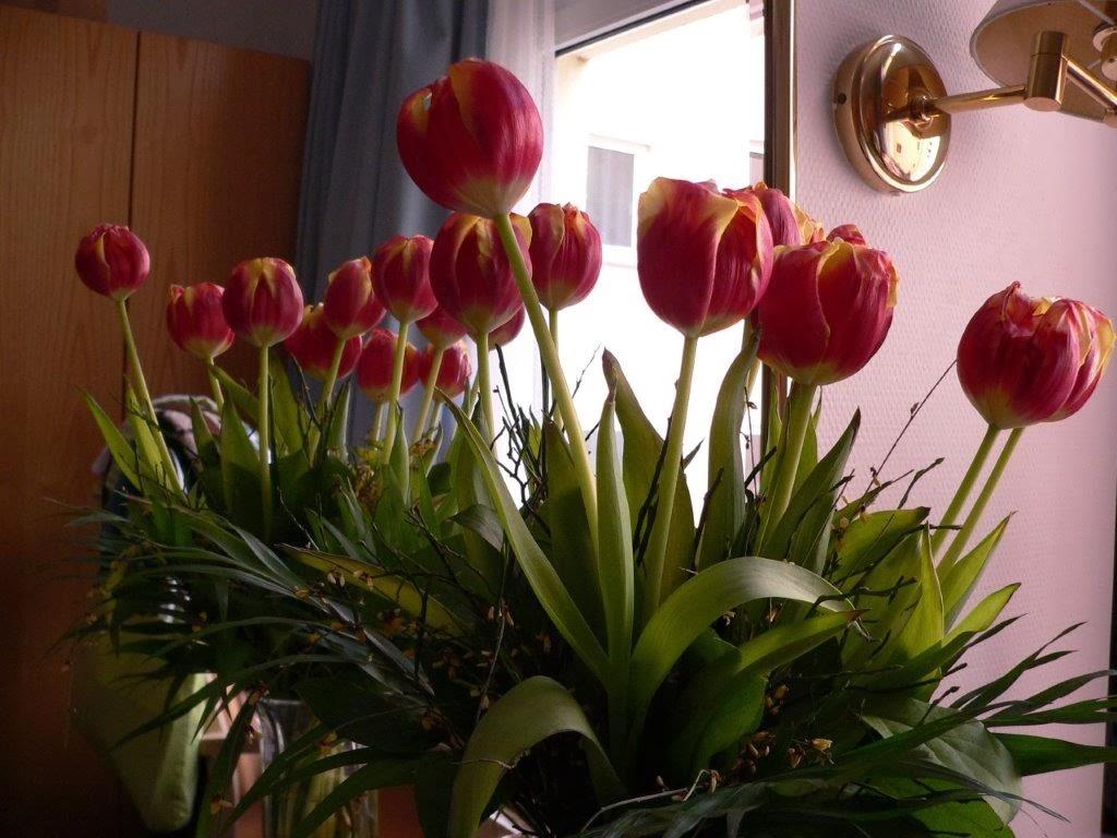 Tulpen Rehaklinik Bad Wildungen