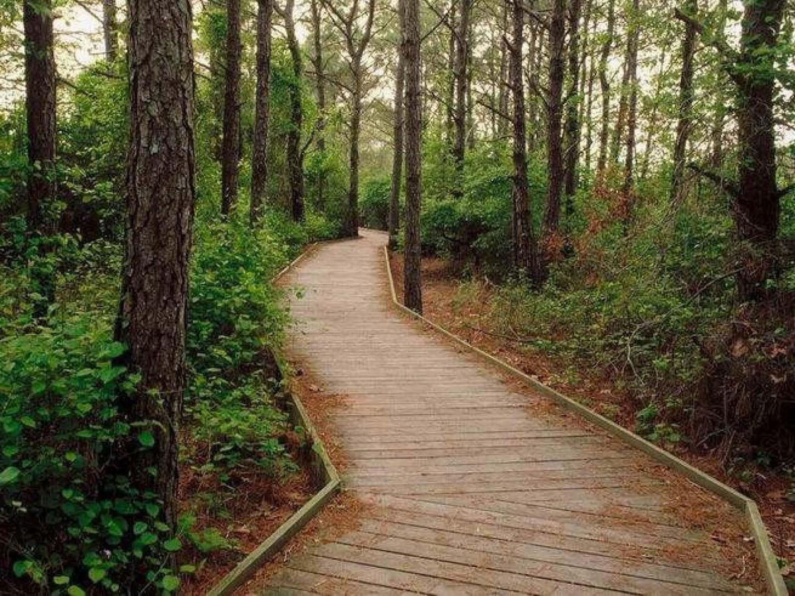 Βόλτα στο δάσος του πηλίου