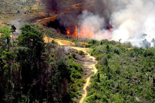 Aktivis Lingkungan Gugat Pengusaha Pembakar Hutan