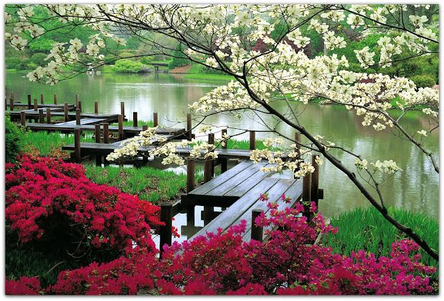 http://3.bp.blogspot.com/-jYsFrprgYvI/URi0QBGpp4I/AAAAAAAAVdA/LpIiG7vffhA/s640/Spring+in+Japan+%2816%29.jpg
