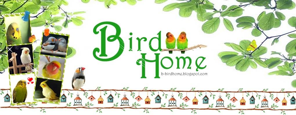 BirdHome*