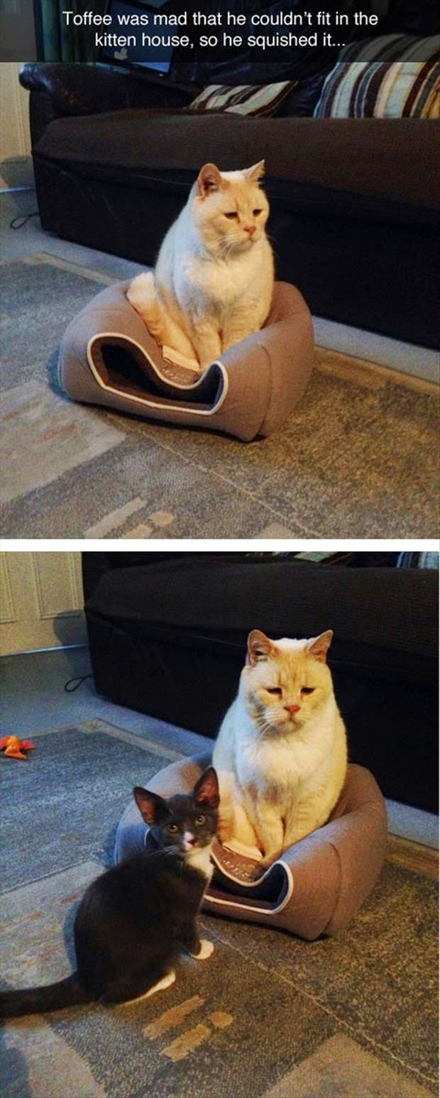 Funny-Kitty's-Face-Meme-Images