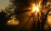 Světla v koruně stromu