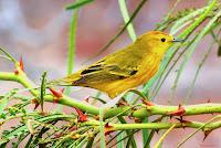 Galapagos Island birdlife