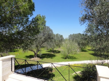 land with Olive and almond trees