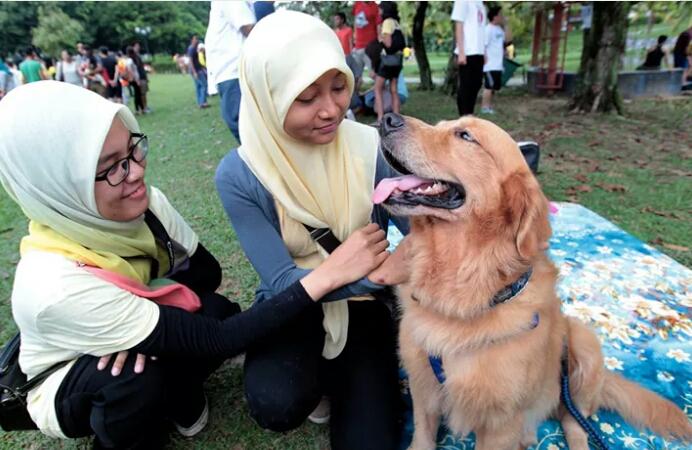 ANJING BETUL LAH Kempen Melayu Islam SENTUH Anjing Nurul Izzah ucap TAHNIAH kepada Penganjur