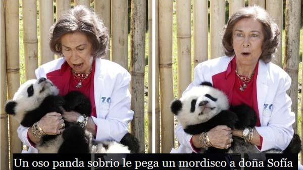 Reina Sofia mordisco panda