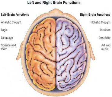 Brain Hemispheres2