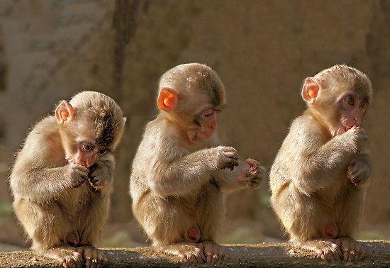 baby monkeys  cute...